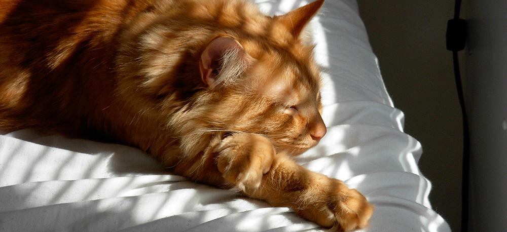 cat-slide